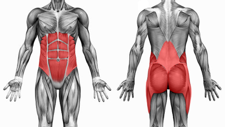 lombalgia_x_musculos_core